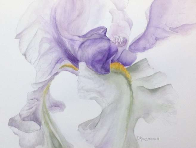 "THE VEILED IRIS , Watercolour, 12"" X 16"", $$300.0000"