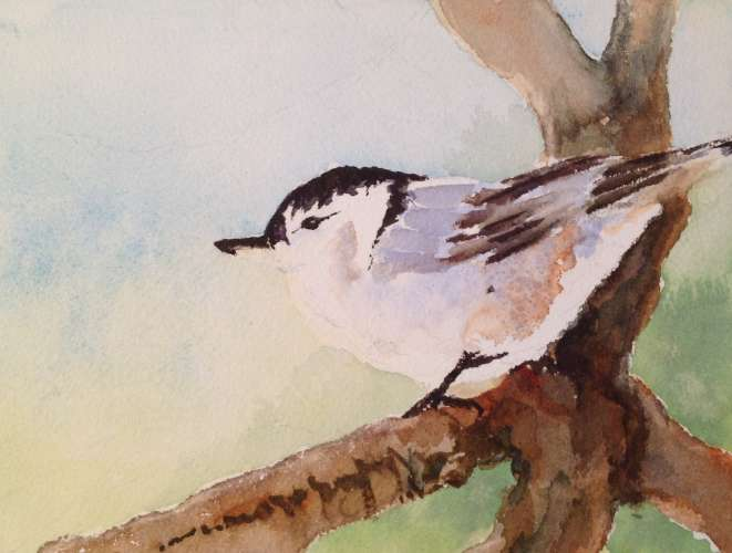"Nuthatch, Watercolour, 14 1/2""X12  1/4"", $$110.0000"